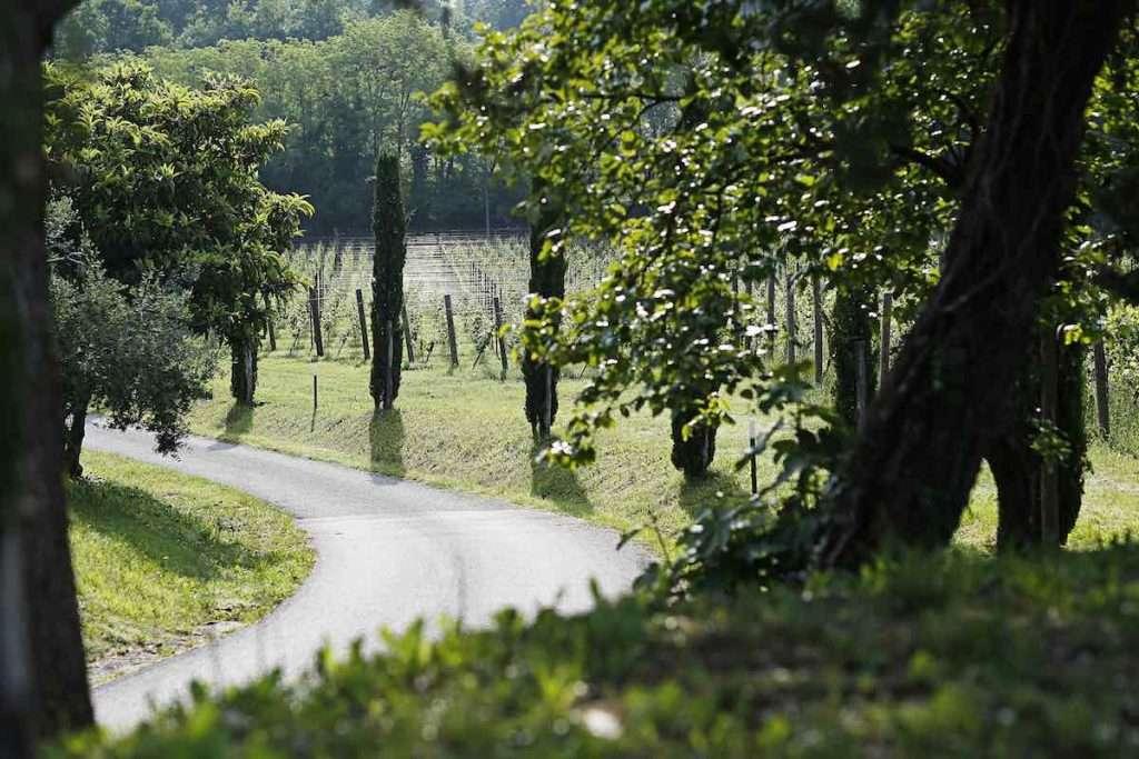 Vaia, la tempesta abbattutasi sul Nord Est italiano nell'ottobre 2018, ha interessato migliaia di ettari di foreste del Friuli Venezia Giulia