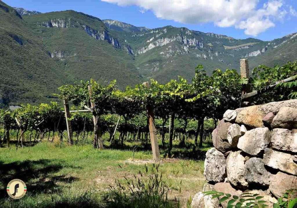 Il Consorzio Doc delle Venezie è nato nel 2017, unendo i produttori di Veneto, Friuli Venezia Giulia e Provincia Autonoma di Trento facendo leva sul Pinot Grigio