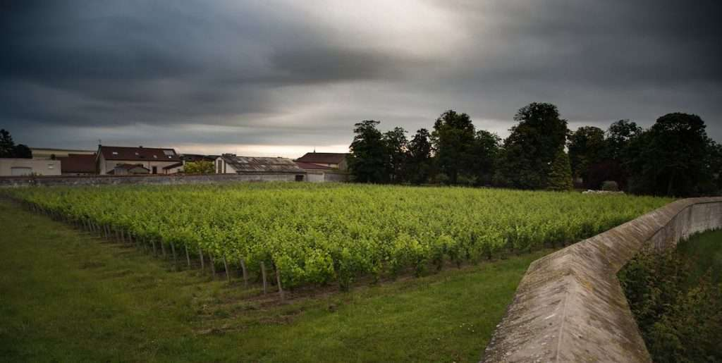 Una veduta del Clos d'Ambonnay. In copertina, il Clos du Mesnil (Ph. Marcello Brunetti)