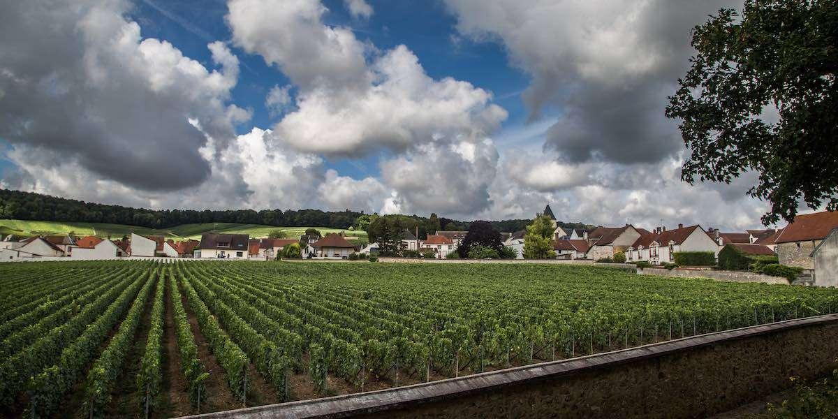 Clos e tesori di Champagne: il mono-vitigno è leggenda con Krug