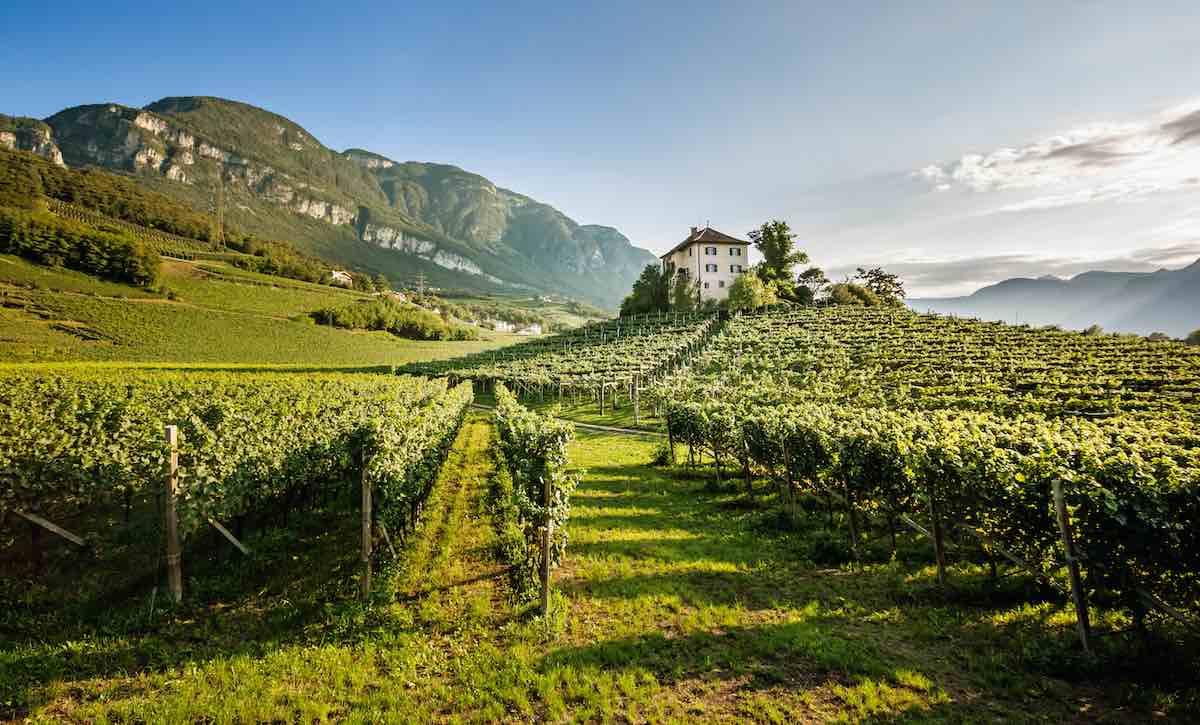 Alto Adige diVino: viaggio al centro dell'annata 2019