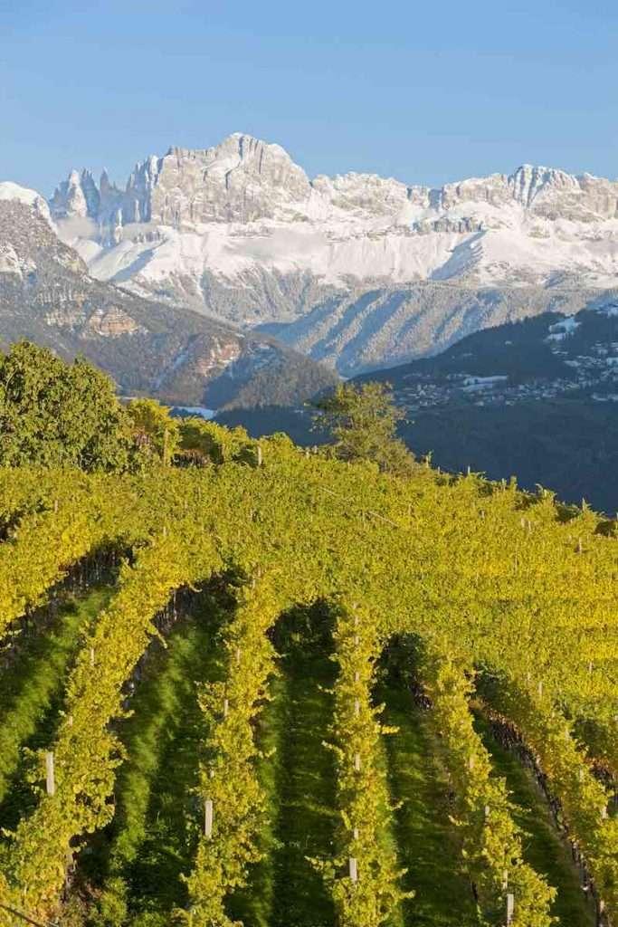 Fa capo all'Alto Adige circa l'1% della produzione vinicola italiana (Ph. Frieder Blickle)