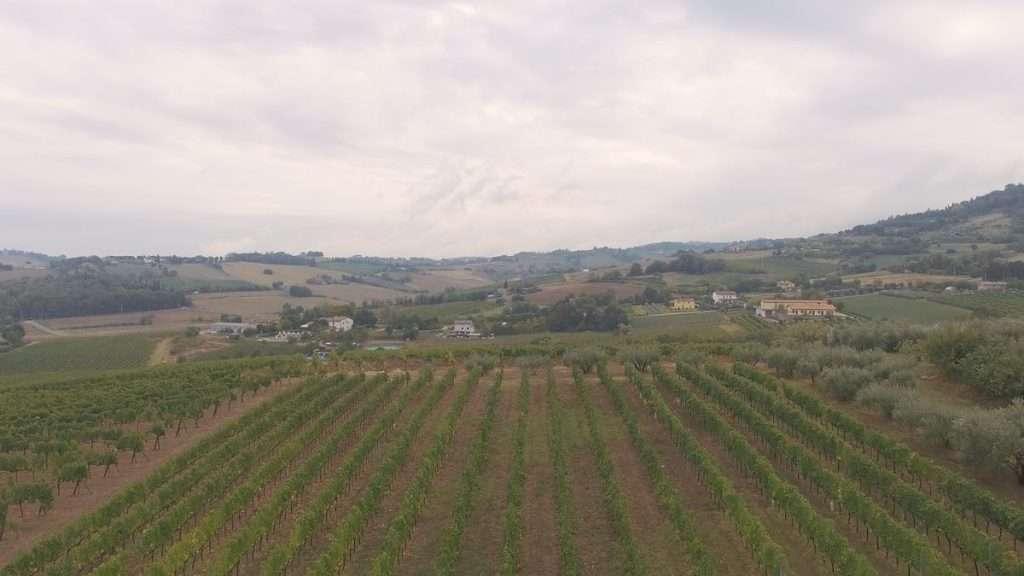 OriginalItalia conta al momento 24 produttori all'interno della propria offerta: uno spaccato, da nord a sud, di quel microcosmo che caratterizza da sempre l'Italia del vino