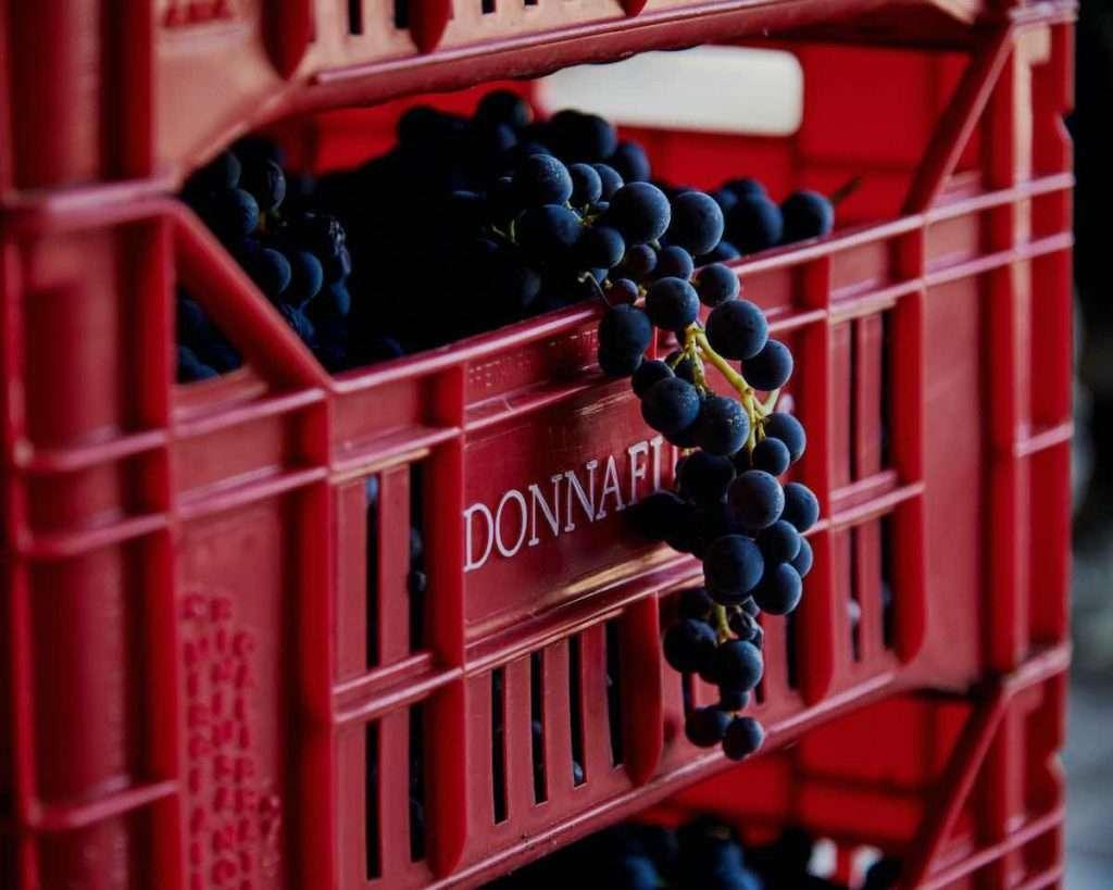 La partnership che si rafforza tra Donnafugata e Dolce&Gabbana, ambasciatori dell'eccellenza made in Italy, si trasforma in racconto della tradizione e del saper fare del Bel Paese (Ph. Luca Di Meo)