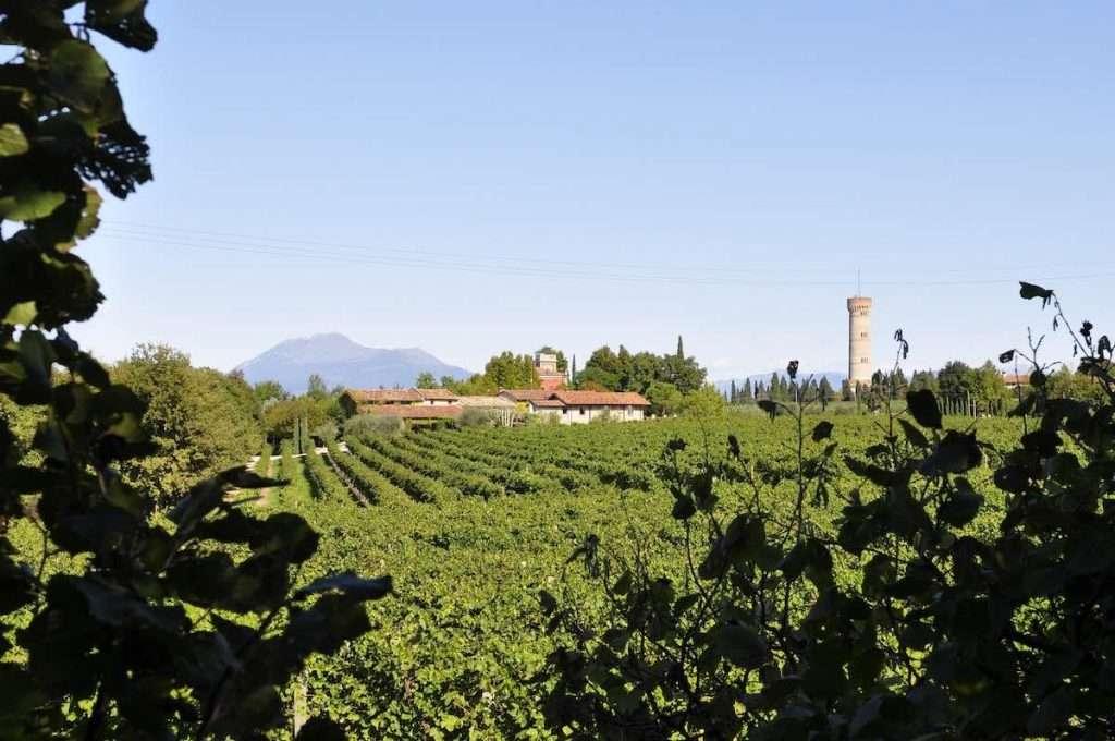 Wine Enthusiast ha posizionato la regione gardesana tra le prime dieci mete enoturistiche al mondo. Qui una veduta di Podere Selva Capuzza
