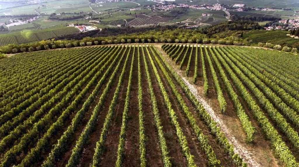 Il vigneto La Fabriseria si trova nella Valpolicella Classica, a 450-500 metri sopra il livello del mare