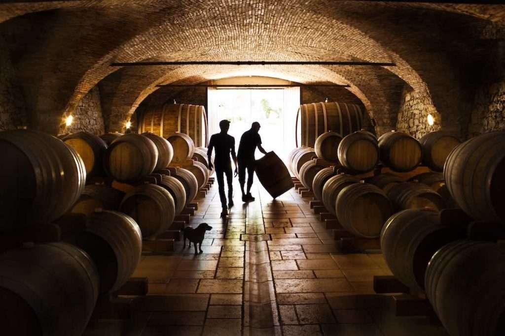 """""""La vita di un'azienda agricola che produce vino si fonda su quattro pilastri: la campagna, la cantina, la vendita e la burocrazia"""" (Annalisa Zorzettig)"""