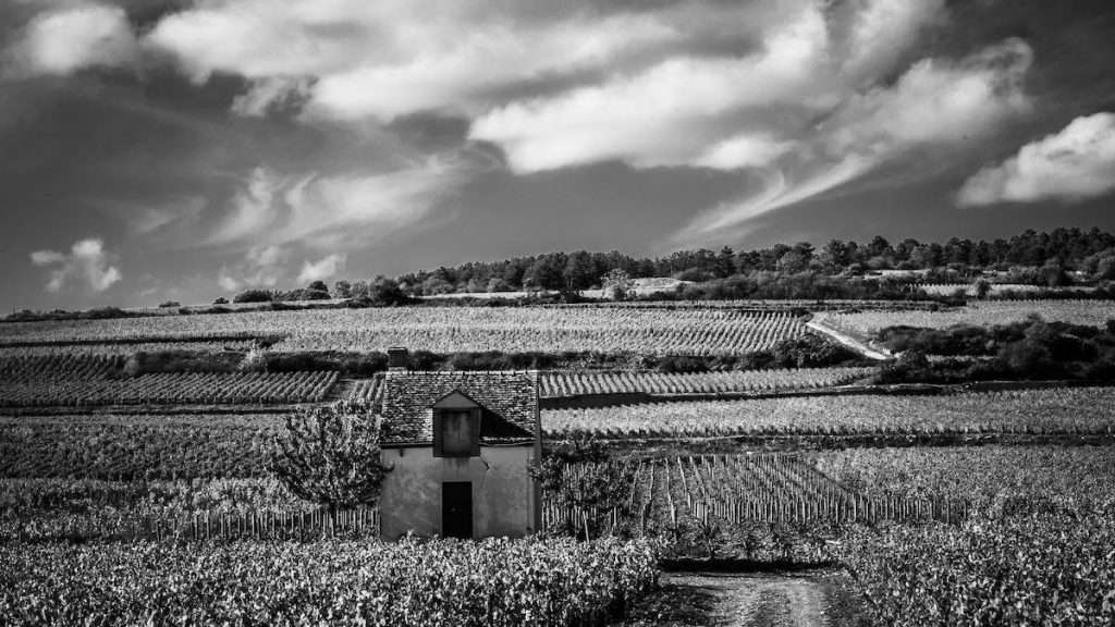 Vero e proprio crollo nell'export dei vini rossi Dop della Borgogna in Usa, che tra ottobre 2019 e marzo 2020 ha segnato un -34%