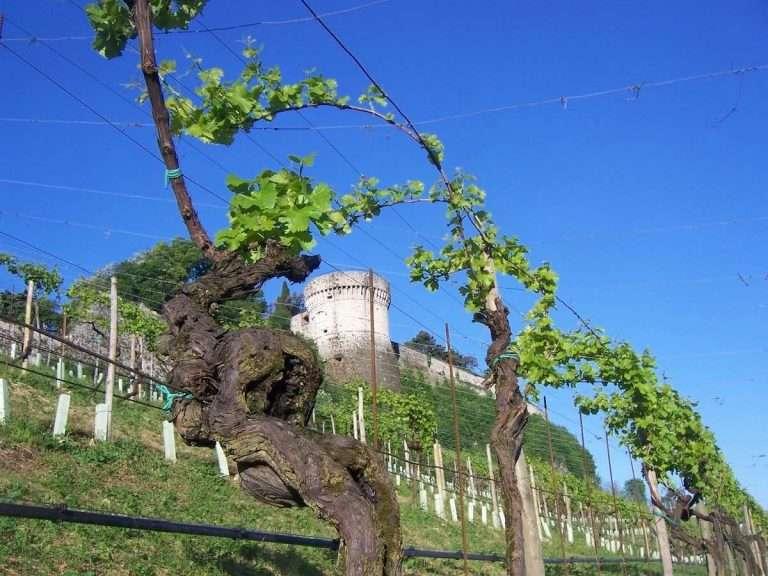 Brescia tra Grand Tour e strade del vino: il più ampio ...