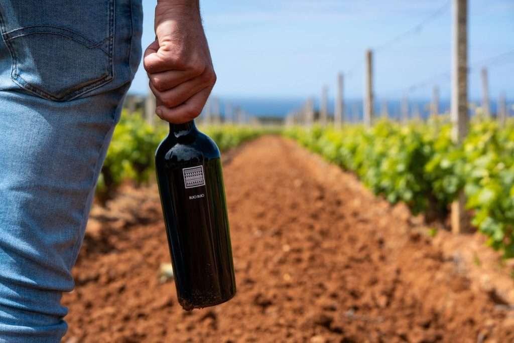 Quando parliamo di Santa Margherita Gruppo Vinicolo oggi raccontiamo di ben 712 ettari – dei quali il 70% di proprietà – lungo tutto lo Stivale