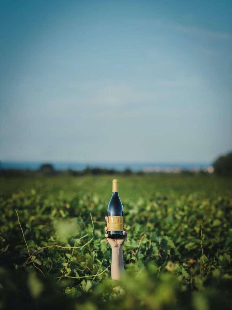 13 milioni di bottiglie, circa 700 soci e 2.700 ettari coltivati: questi i numeri del gruppo che da oggi sarà guidato da Andrea Di Fabio