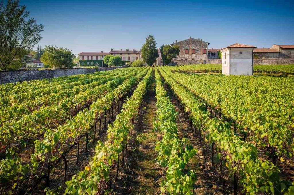"""Con """"Salotto in vigna"""", l'aperitivo va in scena al Vigneto Brolo Berlucchi, dove sono coltivate le uve che danno origine ai grandi Franciacorta della maison"""
