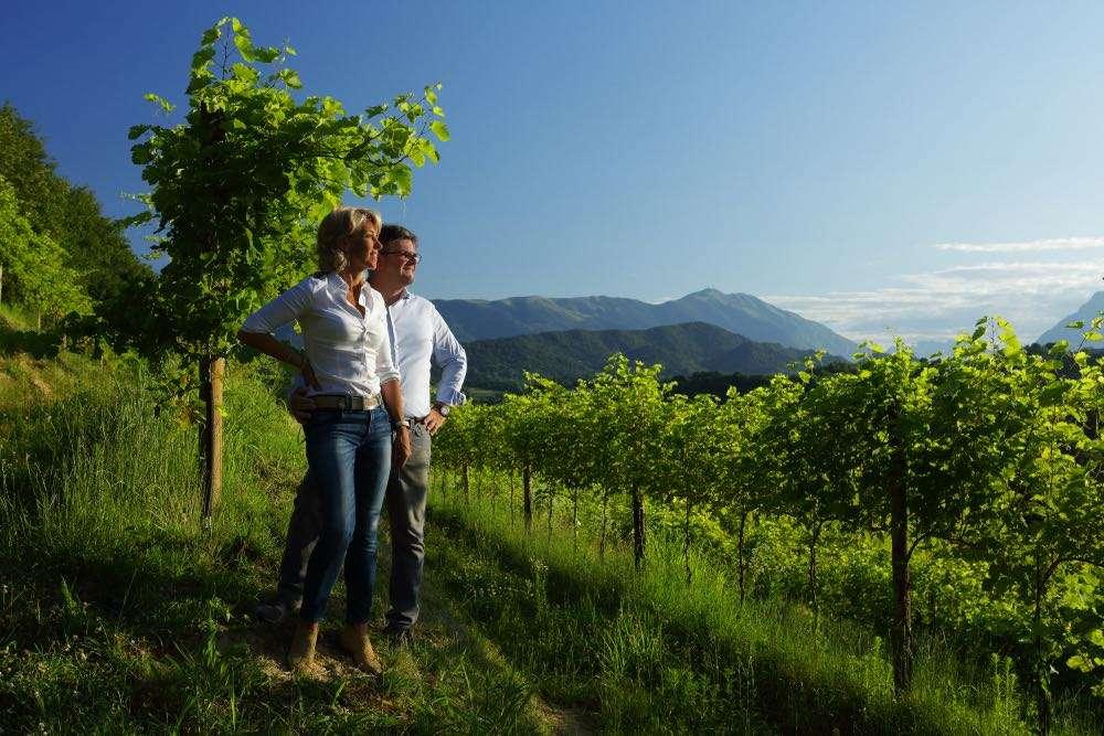 """""""Mantenere la rotta"""": scenari di futuro di una media azienda del vino"""