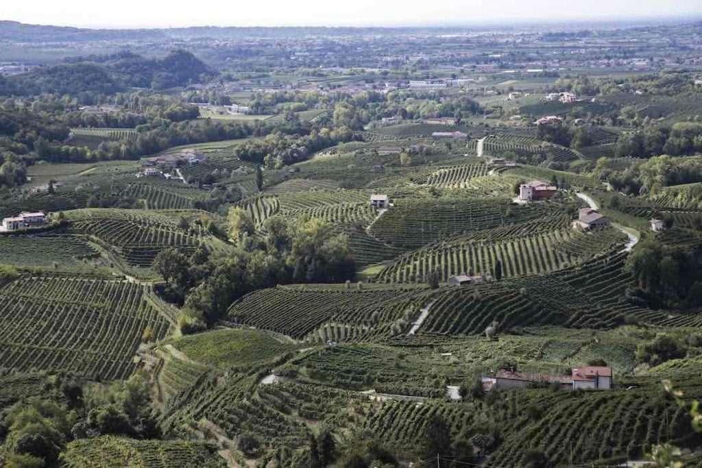 Sostenibilità non solo economica e ambientale, ma anche sociale quella di Schenk Italian Wineries