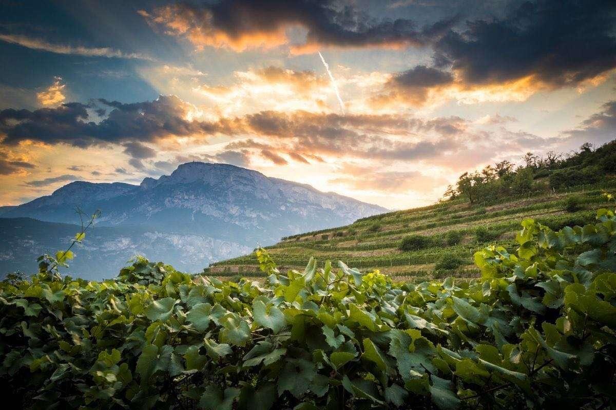 Meno acqua per miglior vino: il Gruppo Lunelli sperimenta l'intelligenza artificiale