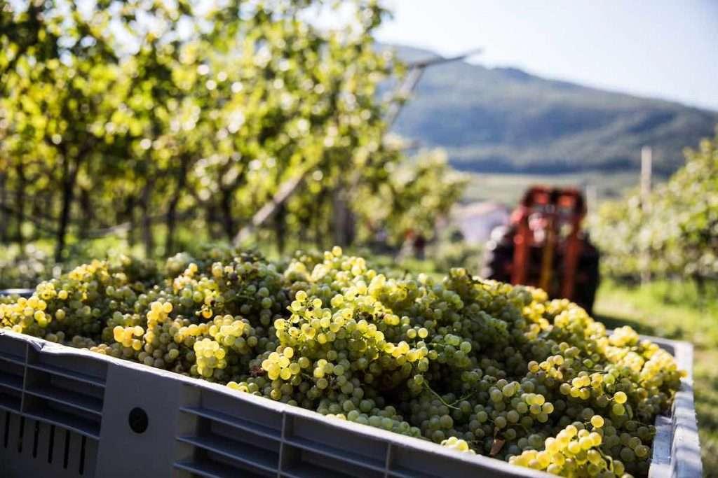Con le bollicine TrentoDoc, il Trentino del vino torna in cima al mondo dopo l'assegnazione del titolo di Wine Region of the Year 2020 da parte di Wine Enthusiast