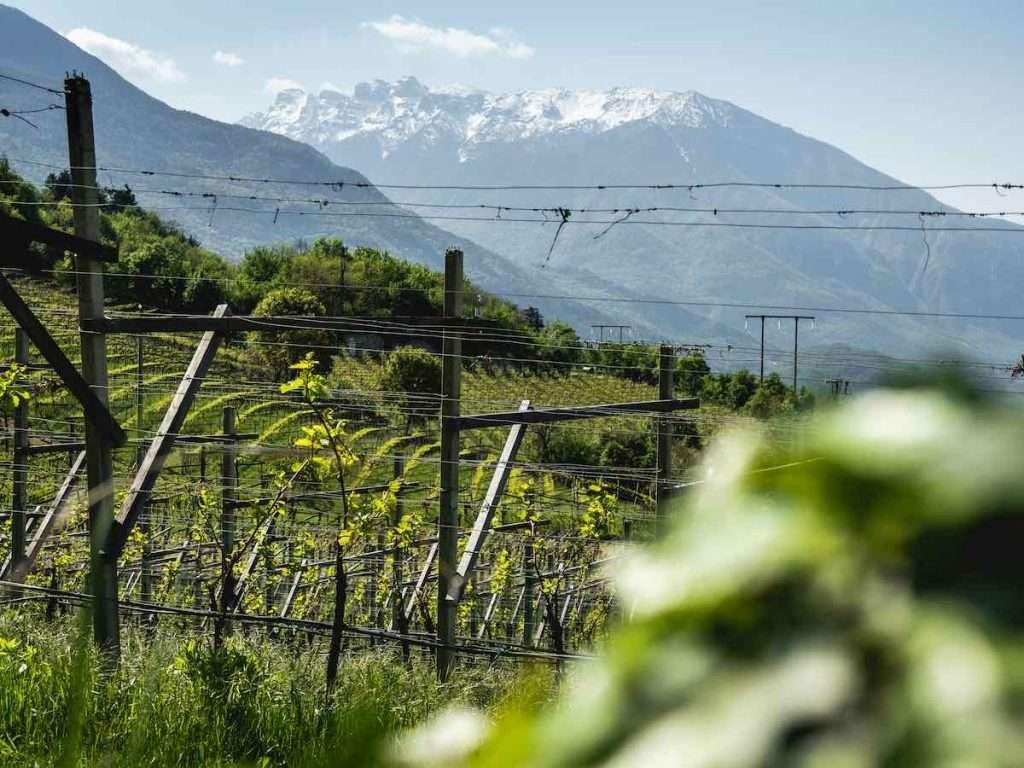 I soci Mezzacorona hanno ottenuto anche nel 2020 la Certificazione delle uve prodotte secondo il Sistema di Qualità Nazionale per la Produzione Integrata (Sqnpi)