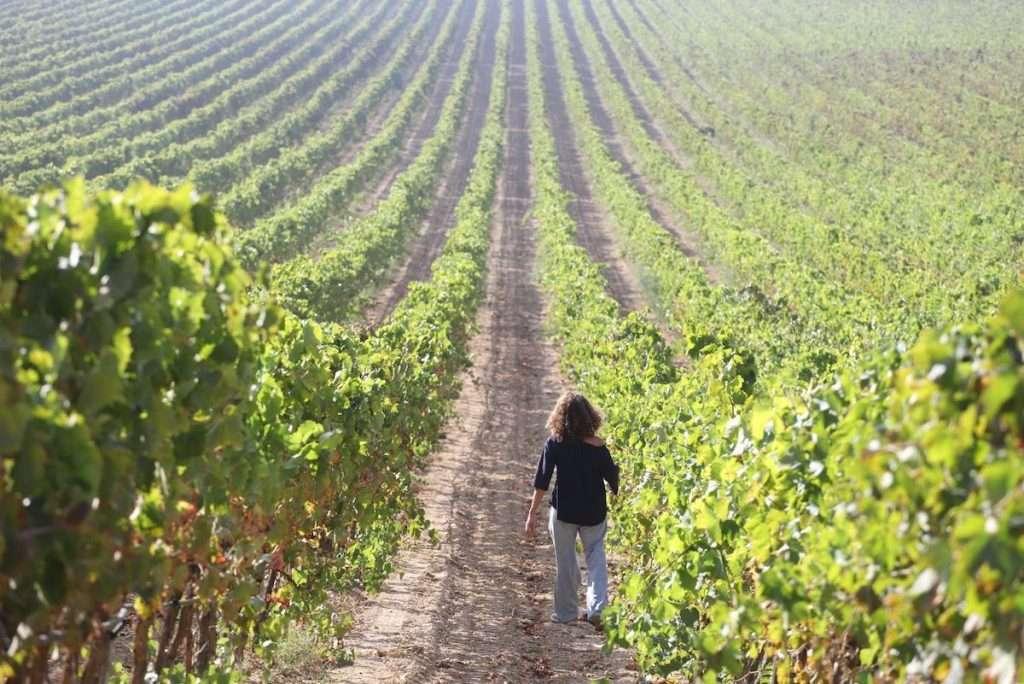 Il lancio di wine club e un nuovo e-commerce: questi i due progetti di Valle dell'Acate dopo un 2020 che ha sconvolto e trasformato le abitudini e le relazioni sociali