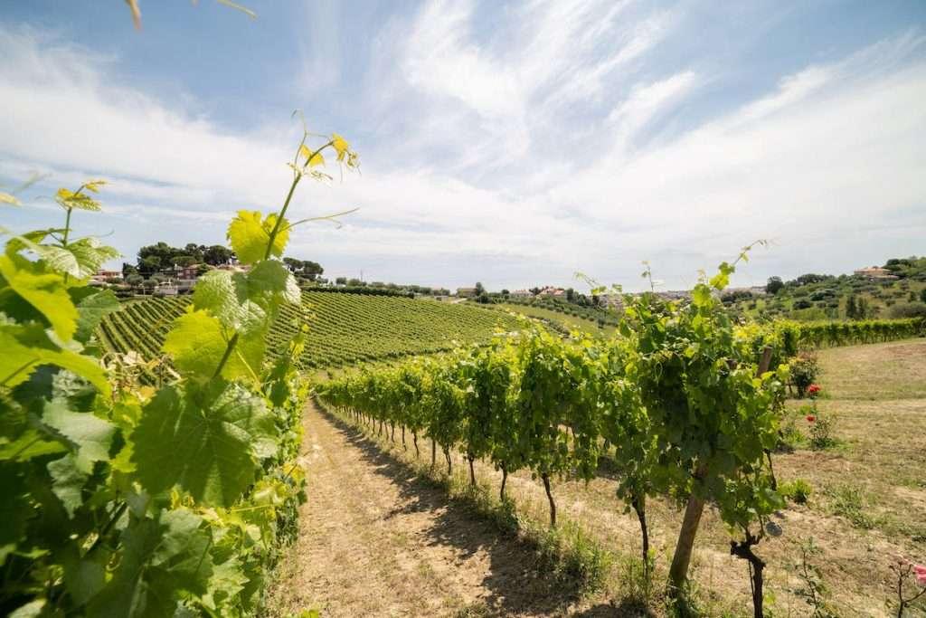 Aumentare la redditività dei propri agricoltori: questo uno dei focus per il futuro dell'Abruzzo del vino
