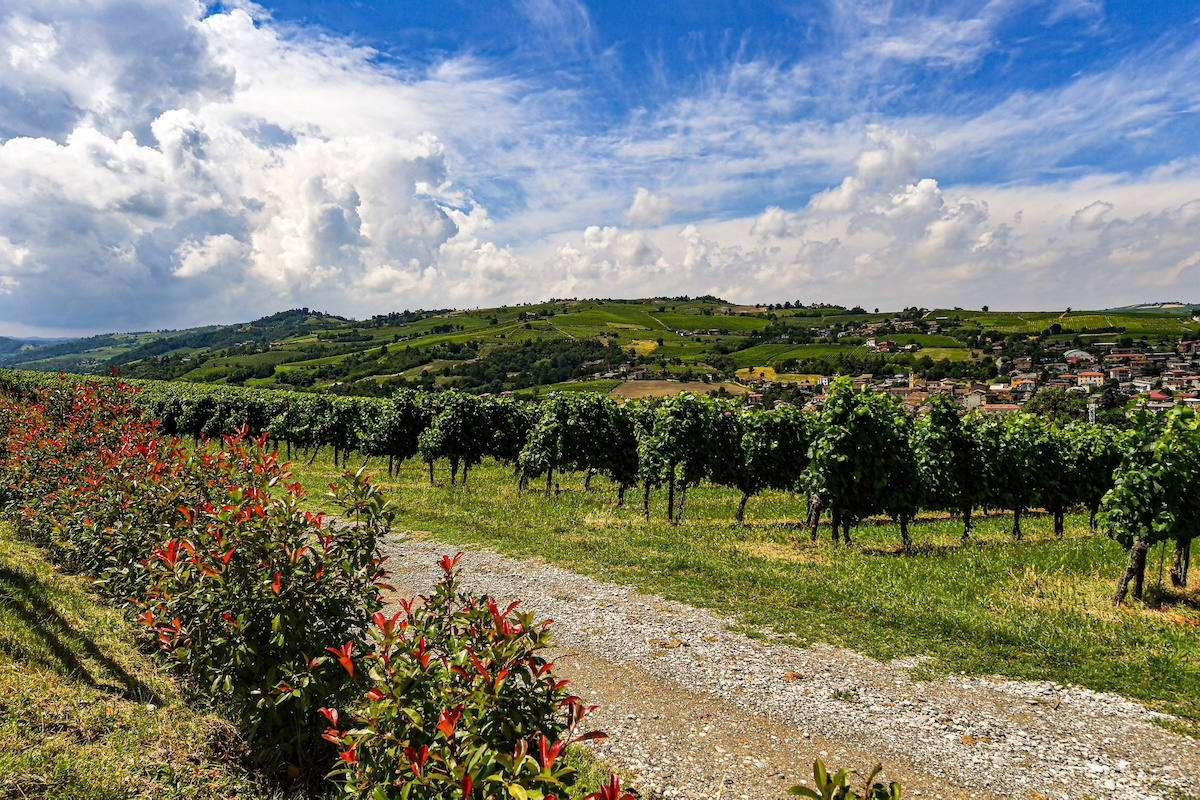 Una nuova Strada del Vino passa dall'Oltrepò Pavese