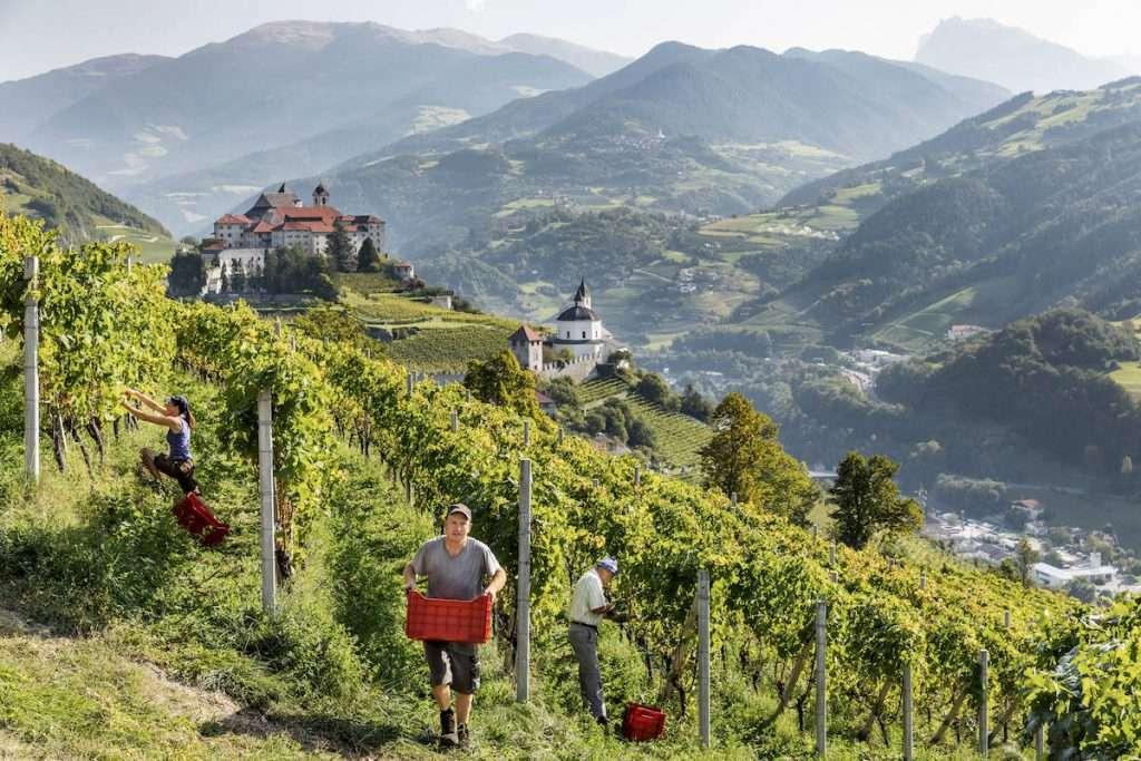 Anche l'annata 2020 ha richiesto ai viticoltori altoatesini molto lavoro e dedizione nei vigneti