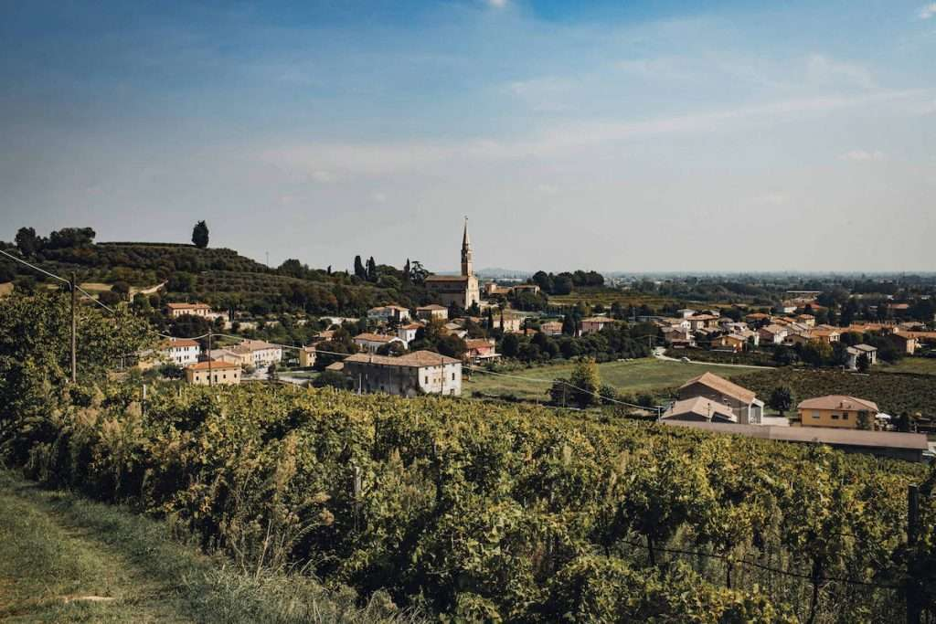 Terzo mandato a capo del Consorzio di Tutela dei vini dei Colli Berici e Vicenza per Silvio Dani