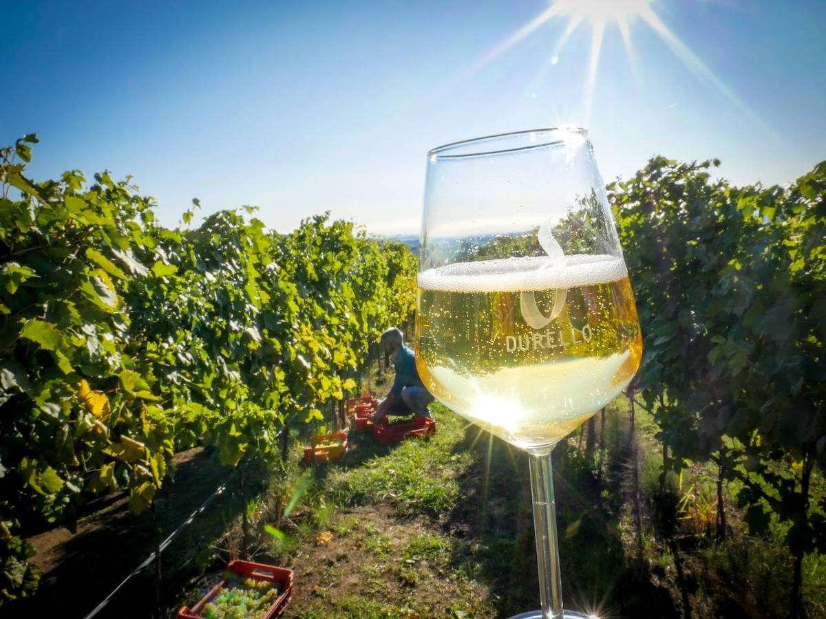 Lessini Durello a scuola di Metodo Classico dallo Champagne