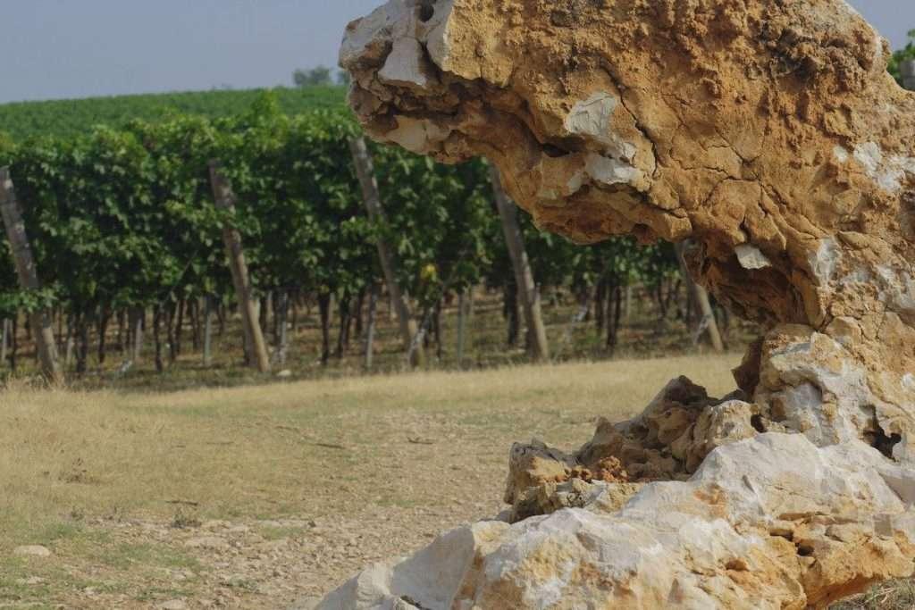"""""""I nostri vini della Valpolicella, e l'Amarone in particolare, nascono in un luogo preciso, la nostra Tenuta Costalunga nella zona Classica"""" (Nadia Zenato)"""