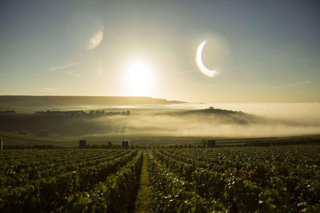 """Il 2003 è stato l'anno della """"canicule"""" (per dirlo alla francese): un caldo simile non si era mai visto in Champagne"""