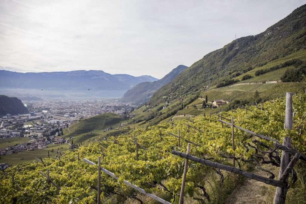 Maso Premstaller, di proprietà della famiglia Vogel di Zurigo. Un appezzamento unico nel suo genere che si trova a Santa Maddalena, tra i 450 e 550 metri, sopra Bolzano, dove prende forma Vigna Premstallerhof Select