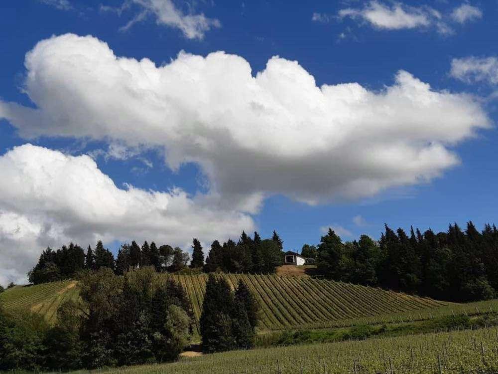 Tenuta Masselina sorge in Romagna su una bellissima collina, dove i vigneti si alternano a pini e cipressi e la vista si spinge fino al mare