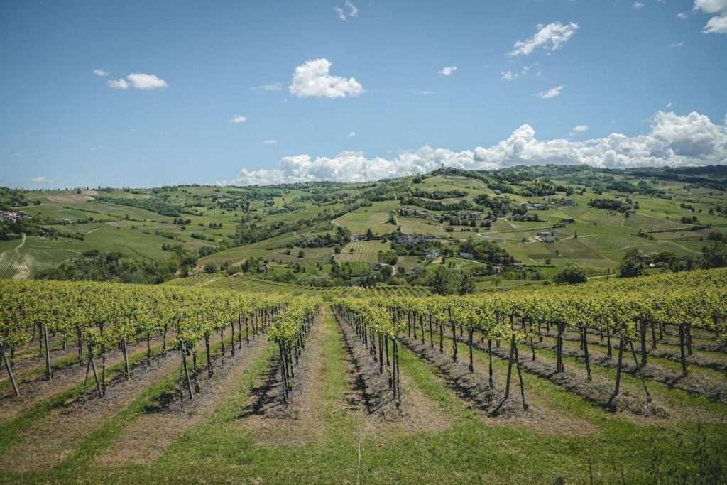 La linea Metodo Classico nasce sulle colline tra i 410, 470 e i 530 metri slm, intorno a Tenuta di Caseo, nel comune di Colli Verdi in Alta Valle Versa, acquisita dalla Famiglia Tommasi nel 2013