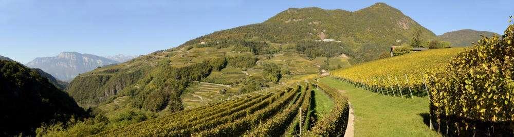 """Attraverso il """"Progetto di Zonazione"""", Cembra Cantina di Montagna ha identificato Vigna Cancòr come cru ideale per la coltivazione del Riesling"""