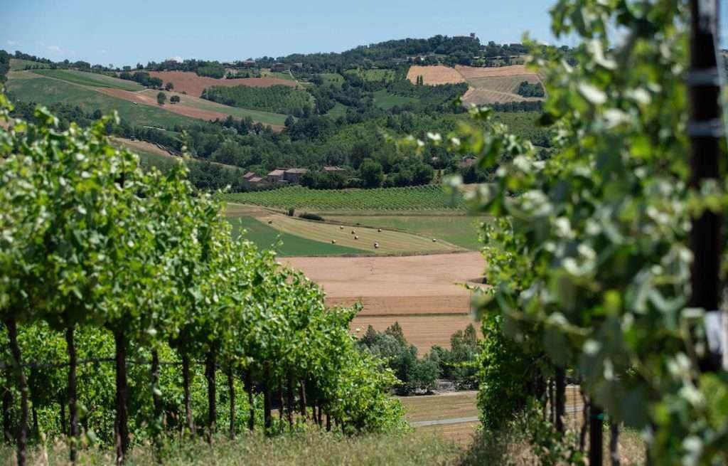 Quelle che compongono la linea Invernaia di Casali Viticultori sono  creazioni che valorizzano vitigni autoctoni e internazionali storicamente coltivati sulle colline di Reggio Emilia, prodotti in quantità limitate e destinati esclusivamente ai ristoranti di maggior pregio