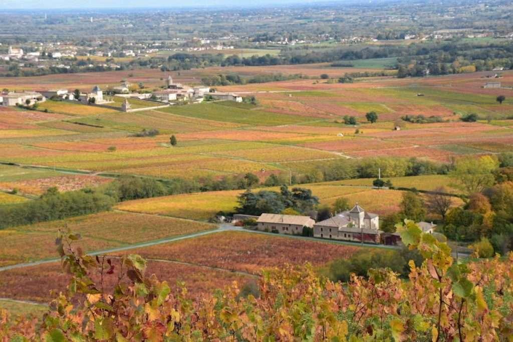 Il Château des Moriers, nel Beaujolais, dove nasce il vino in lattina di Miss Vicky Wine