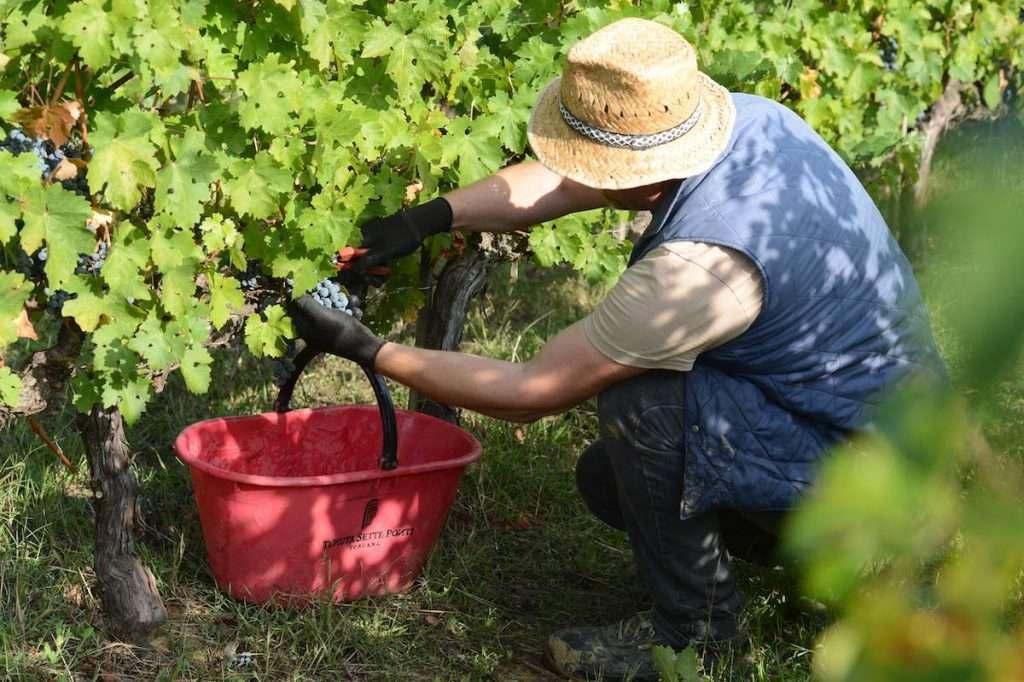 Gestite in regime di agricoltura biologica, le vigne da cui nasce Oreno sono seguite con attenzione in ogni fase, fin dall'inizio del ciclo vegetativo e produttivo