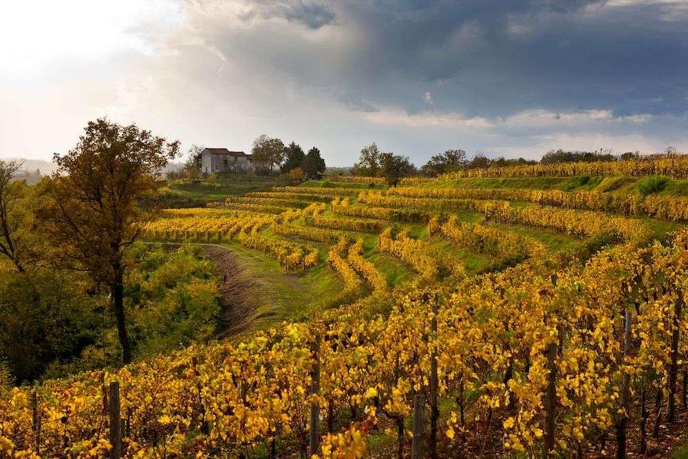 Friuli Venezia Giulia: le esperienze enogastronomiche d'autunno
