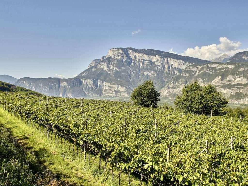 Nel 2001 Aquila Reale diviene un vero e proprio cru Cesarini Sforza, coltivato nel vigneto di Chardonnay che sorge a Maso Sette Fontane