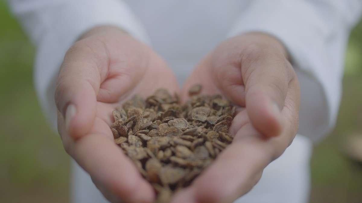 Food for Change 2021: con Slow Food a tutela della biodiversità. L'Italia c'è
